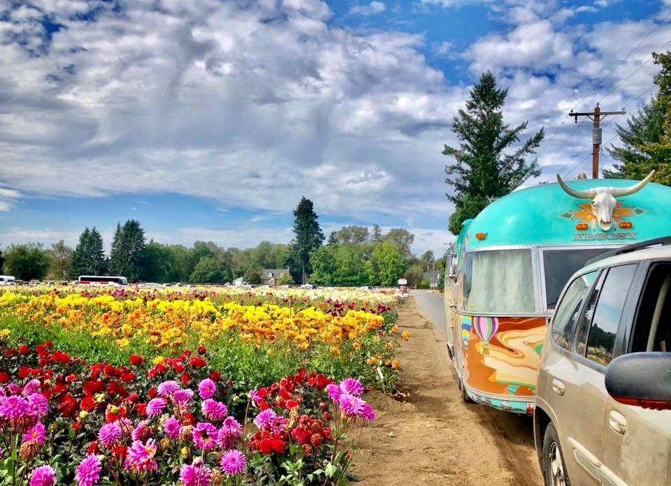 brightly painted '76 Airstream parked next to flower field