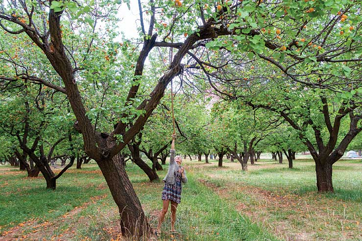 RV sites at Fruita Campground in Capitol Reef National Park are conveniently located near the orchard