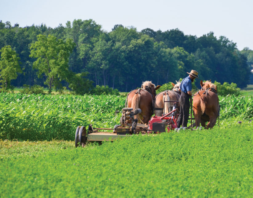 Recalling the simplicity of the 1800s, an Amish farmer plows his field using clean, efficient and economical horse power.