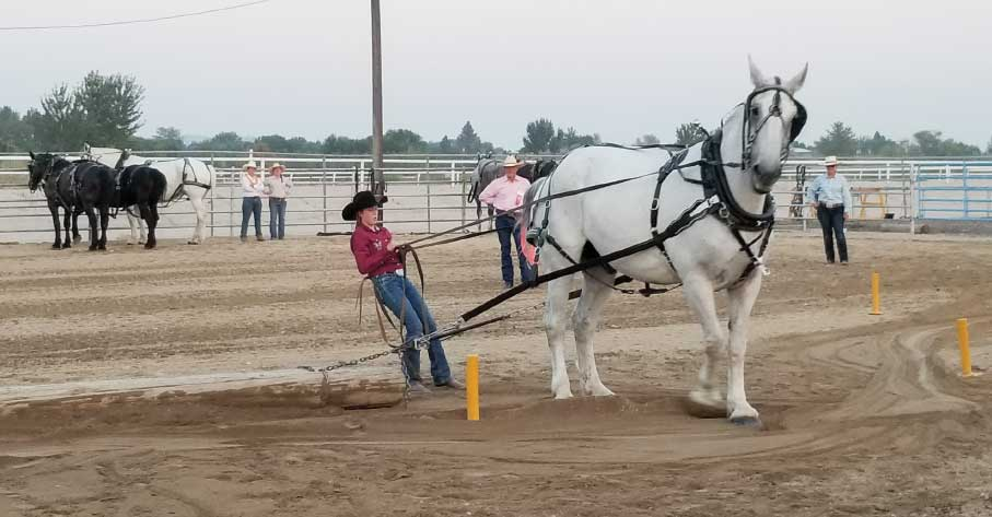 Draft horses pulled logs through an obstacle course at the Western Idaho Fair.