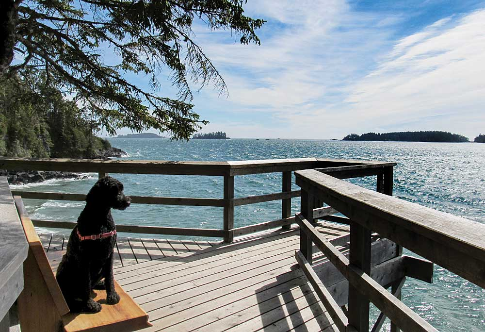 The author's dog, Bella, takes a break on a clifftop deck overlooking the ocean