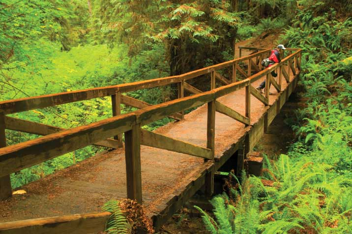 James Irvine Trail offers a scenic 4.5-mile (one-way) hike through Prairie Creek Redwoods State Park to the beach at Fern Canyon.