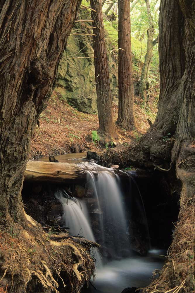 A waterfall among the coastal redwoods along Sobaranes Canyon Trail in Garrapata State Park.
