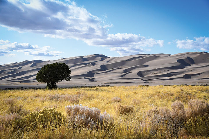 Great Sand Dunes National Park with tree and grass in foreground
