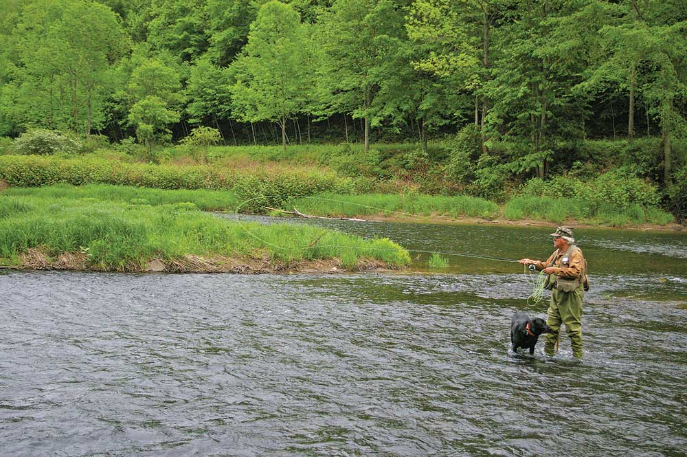 Bob Childs of Big Meadows Fly Shop fishes Pine Creek with his trusty companion, a black Labrador known as Sir Odie of Ansonia.