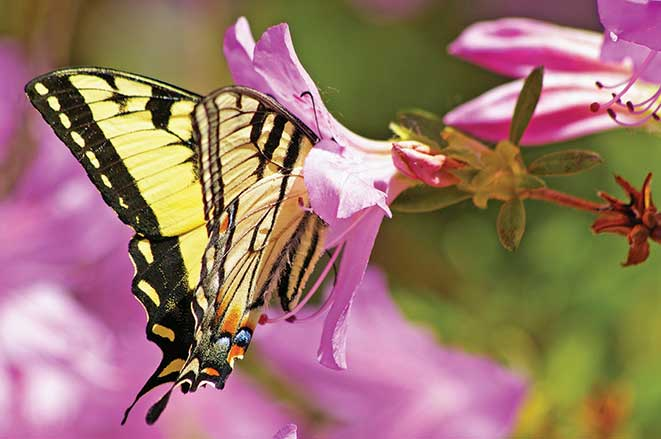Butterflies and flowers give Pennsylvania's Leonard Harrison State Park a splash of color, too.