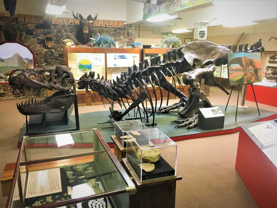 Dinosaur fossils are on display the Carter County Museum