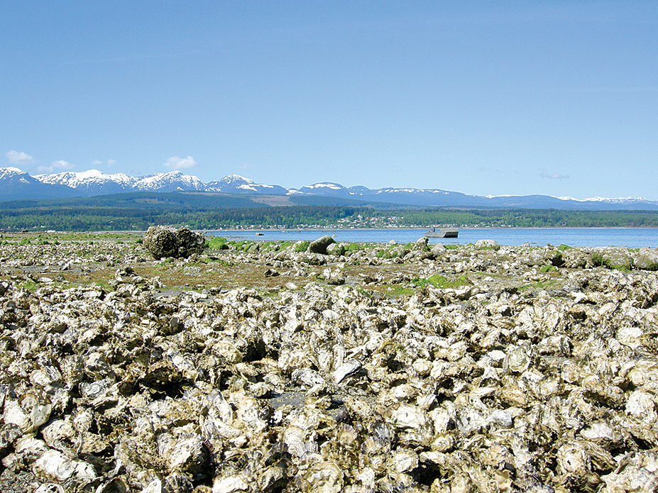 Baynes Sound flows next to the seaside hamlet of Fanny Bay, famous for its beach-cultured oysters.