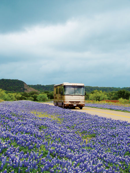 Lavender growing along side of highway with large tan motorhome driving on cloudy day