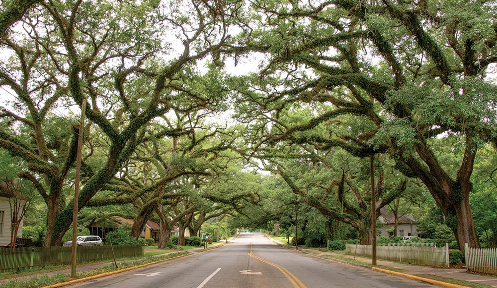 Massive trees form arches over the peaceful streets of Thomasville, ideal for cool, well-shaded walks among the town's historic homes that date back to the 1800s.