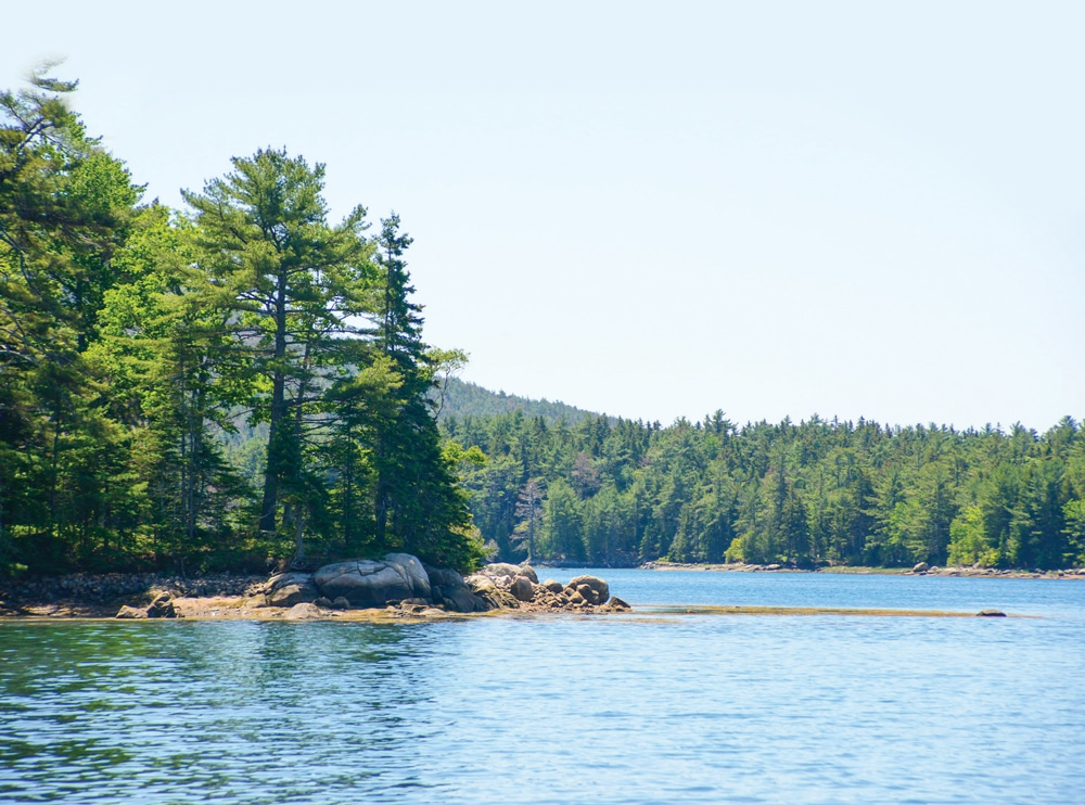 Pines stud the hills down to Somes Sound, which splits the island and is the only fjard in the Lower 48 states.