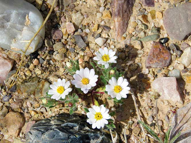 Following a rainy winter, the desert floor and surrounding foothills come alive with blooming wildflowers in spring .