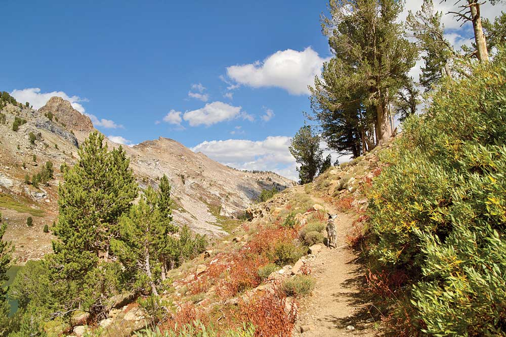 the Ruby Crest National Recreation Trail starts at the end of Lamoille Canyon Road.