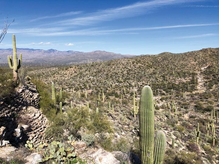 Desert Vista