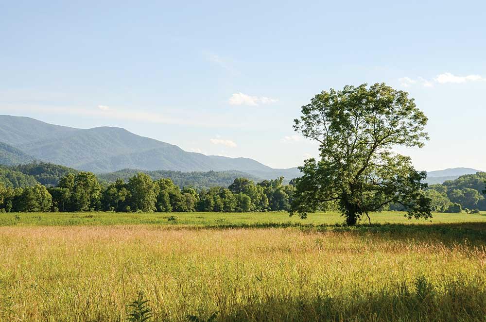 Smokey Mountain National Park meadow