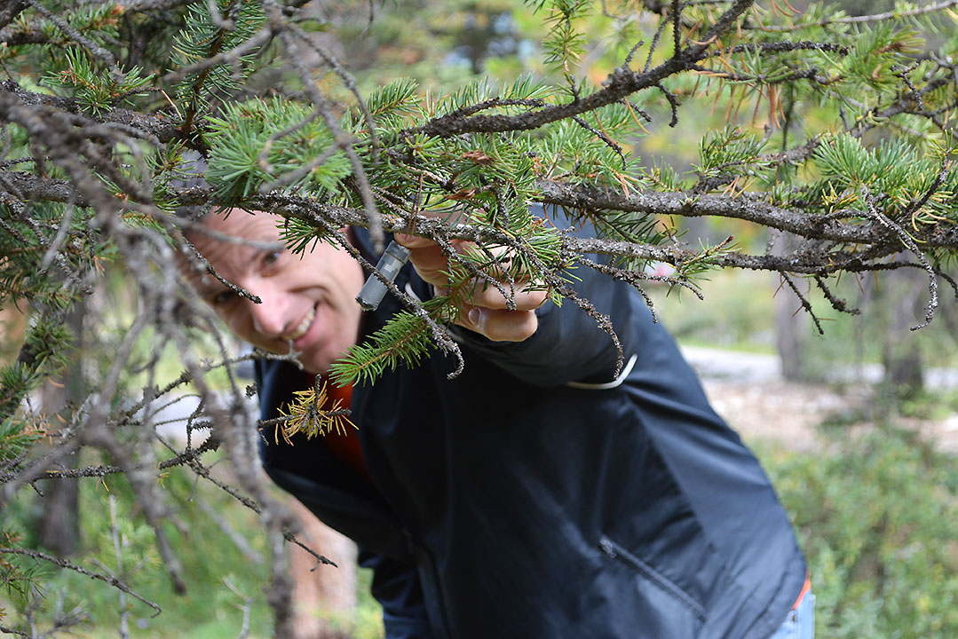 Man in blue shirt finds a geocache in a tree.