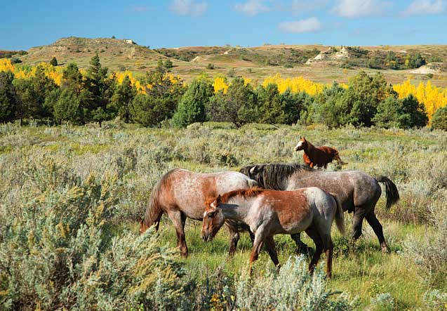 The South Unit also yields up-close encounters with wild horses.
