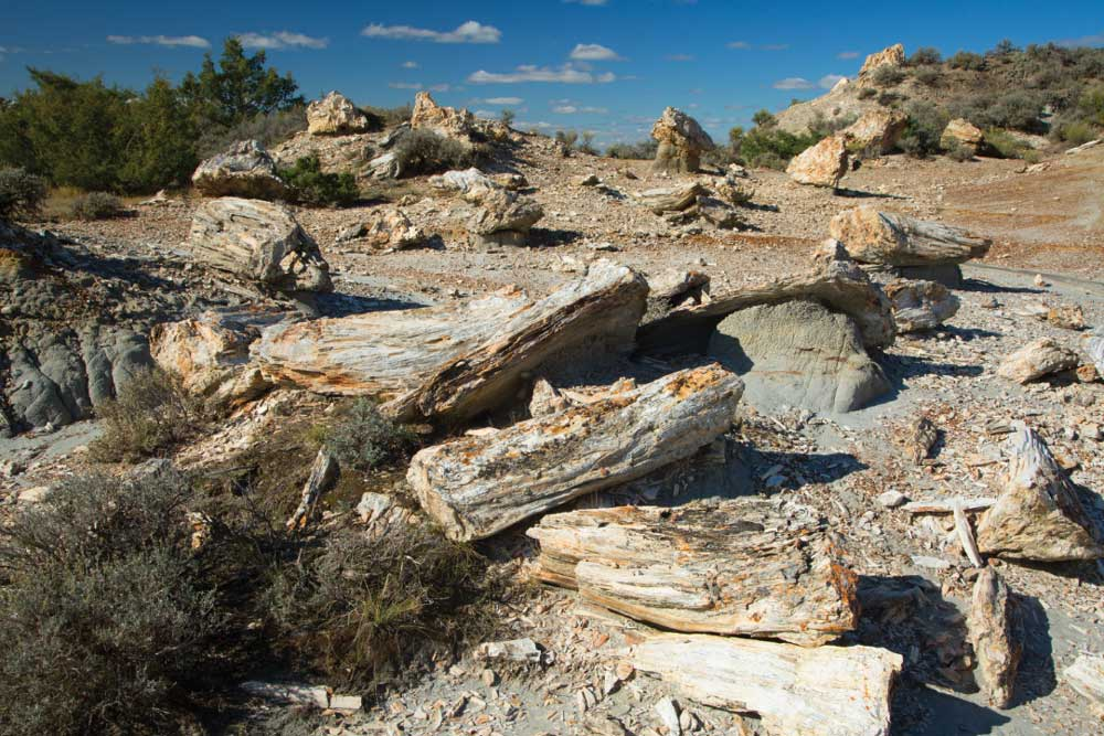 Petrified wood can be found along the North Petrified Forest Trail in the park's South Unit.