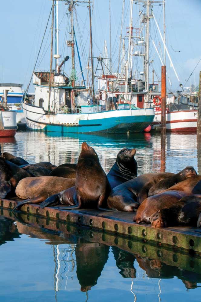 California sea lions enjoy the sunshine on a dock at Charleston Marina, along the Cape Arago Highway.
