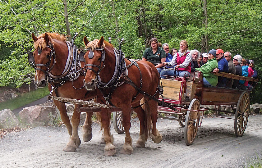 A horse-drawn wagon takes visitors on a tour along Acadia's famous carriage roads.