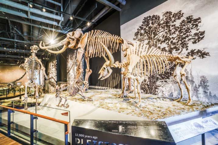 The paleontology collection at the Natural History Museum of Utah