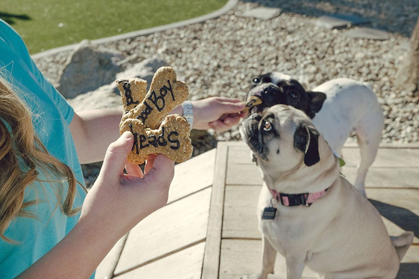 Homemade dog treats and two pug dogs up close