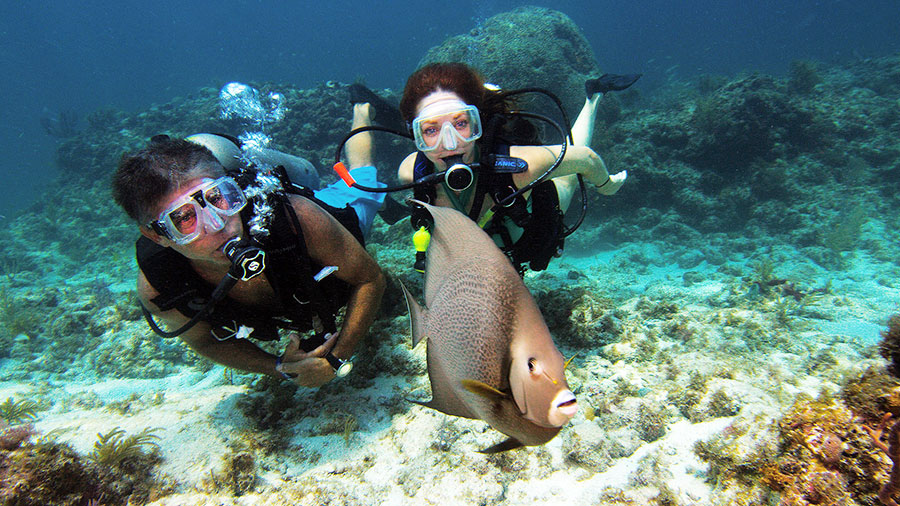 Two divers following a fish in a coral reef area.
