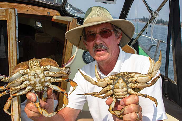 Charlie Zalmanek explains that if a crab's abdomen (the flap of shell that folds under from the rear) is narrow, it's a male; if it's wide and rounded, it's a female.