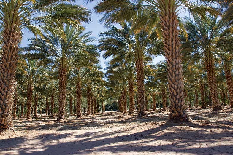 Agritourism allows visitors to see farms like Martha's Gardens, which has around 8,000 palm trees producing gourmet Medjool dates.