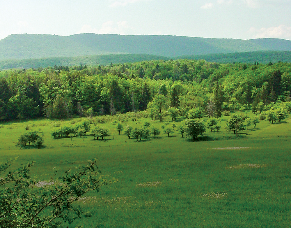 Morgantown's surroundings  are green, green, green, making it a great location for outdoor activities.