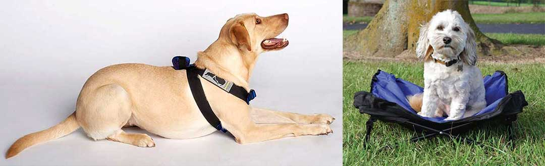 Black harness on golden lab and white small dog on blue pet bed