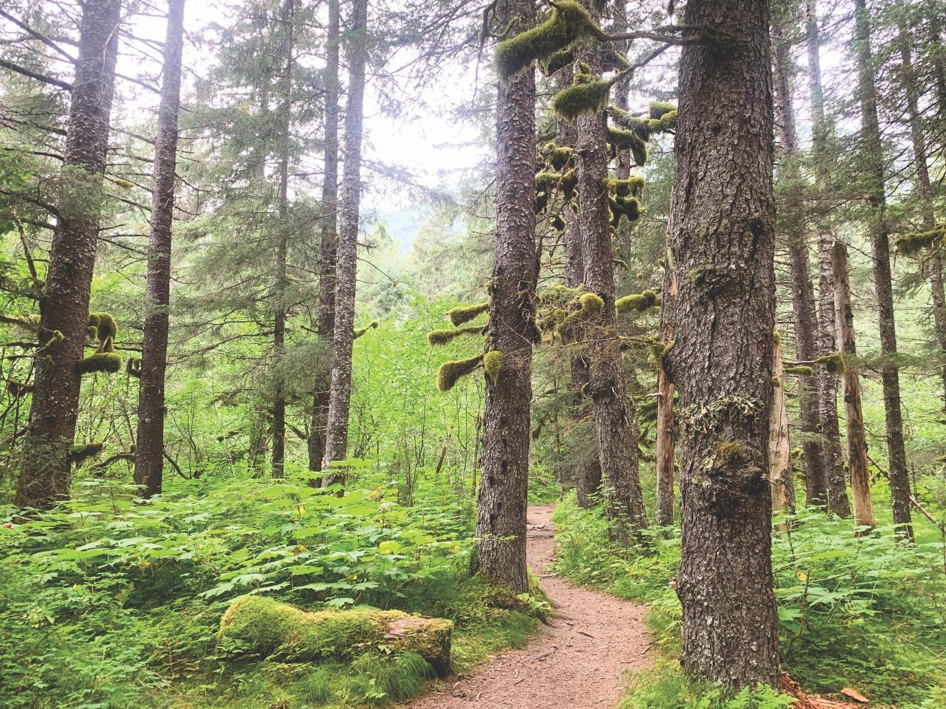 Caines Head Hike