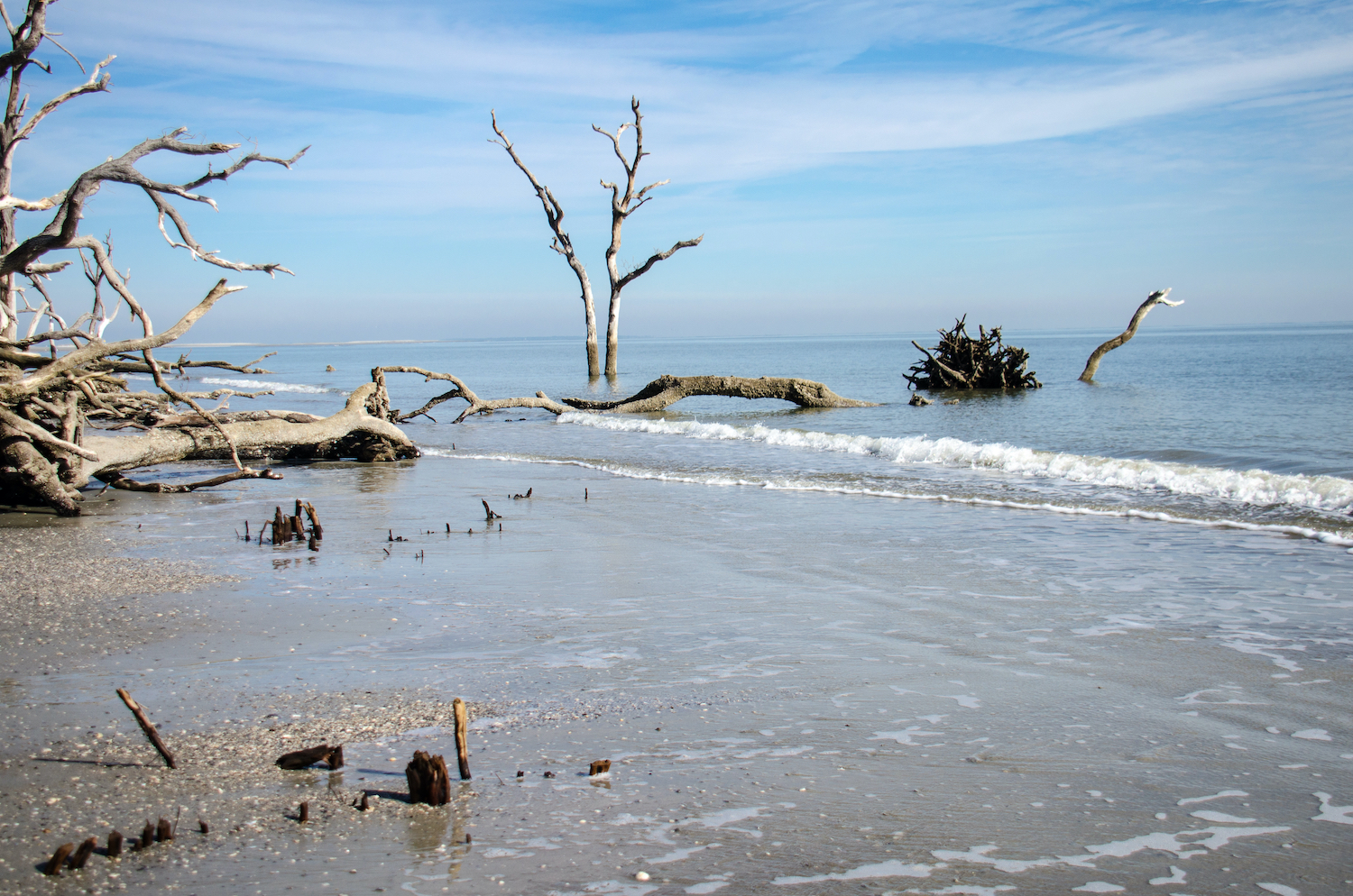 Hunting Island state park with drift wood at the beach