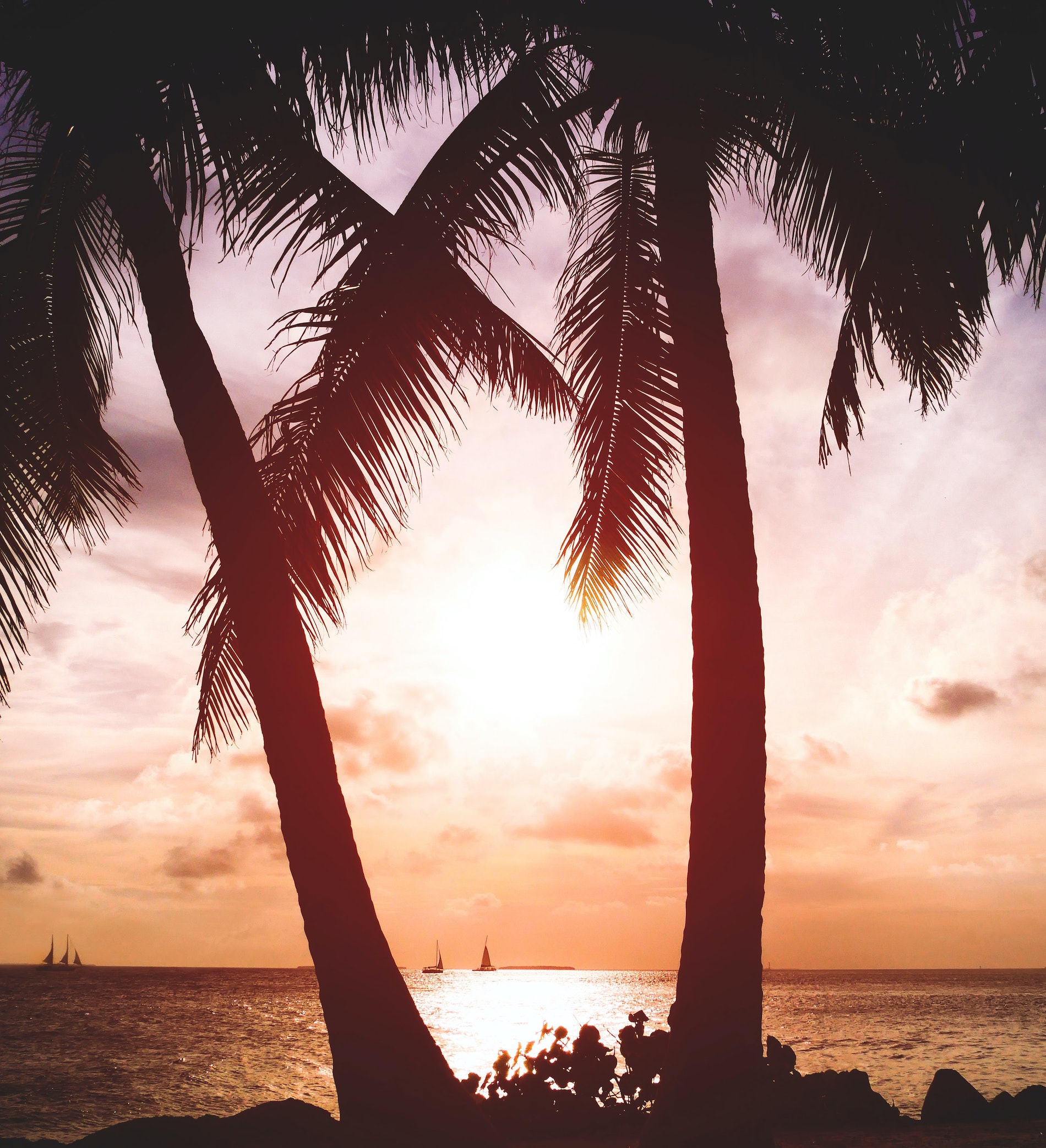 key west palm trees