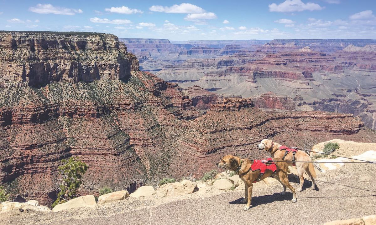 two dogs next to a canyon