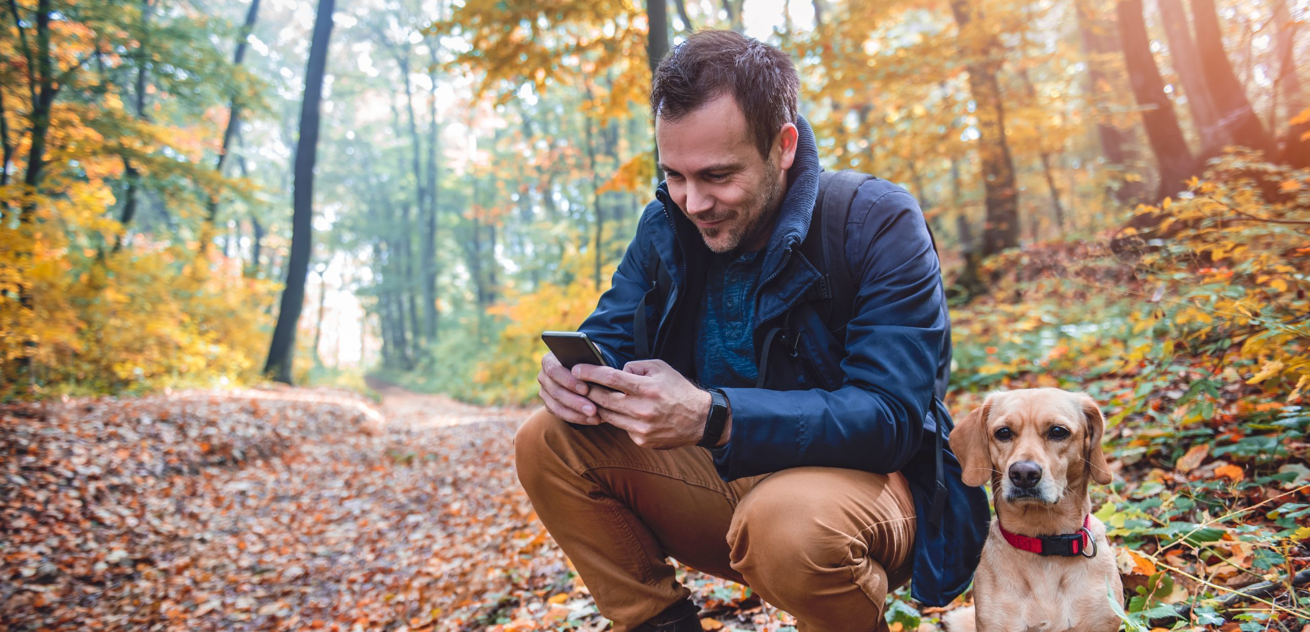 Man Uses Phone Forest
