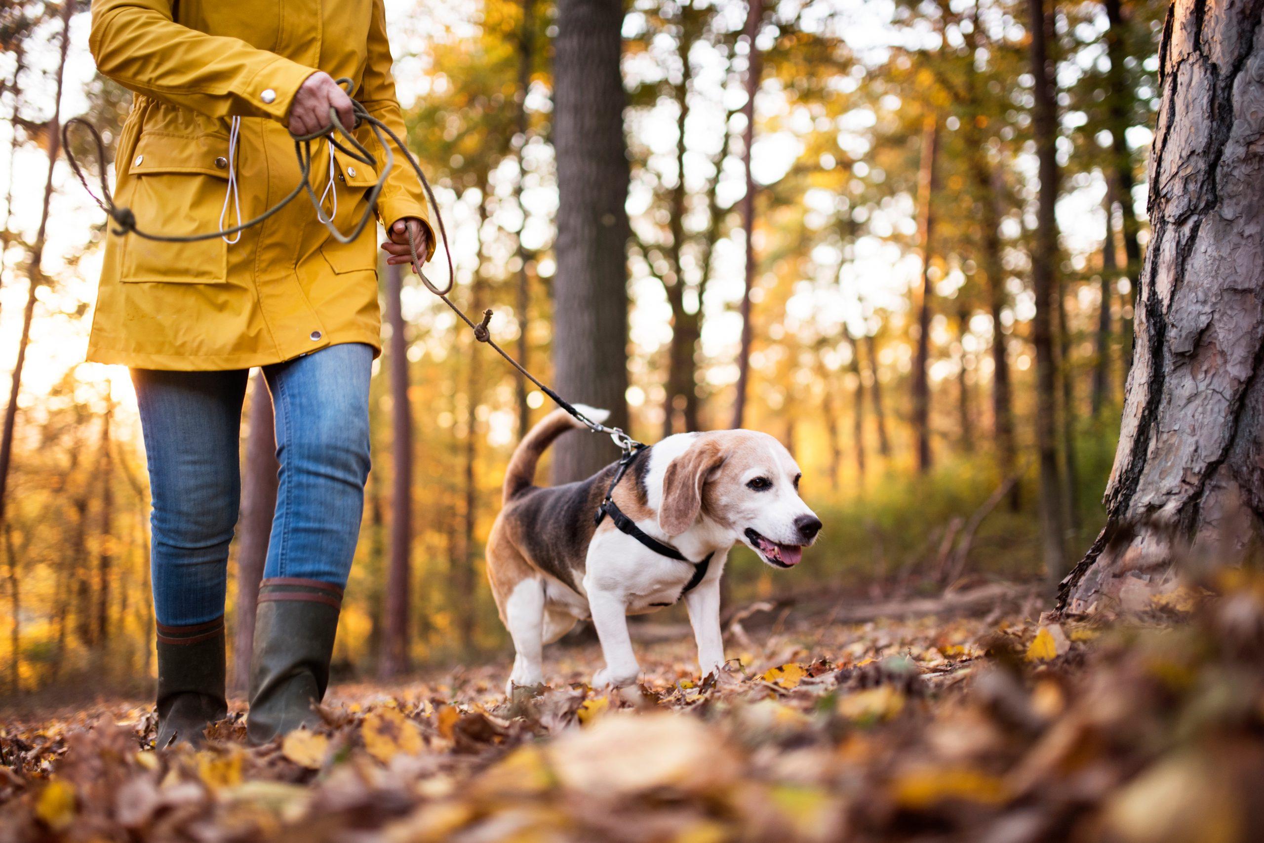 Dog Nature Hike