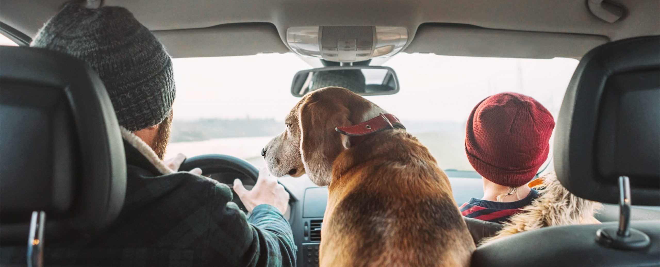 Stress-Free Travel for Pets