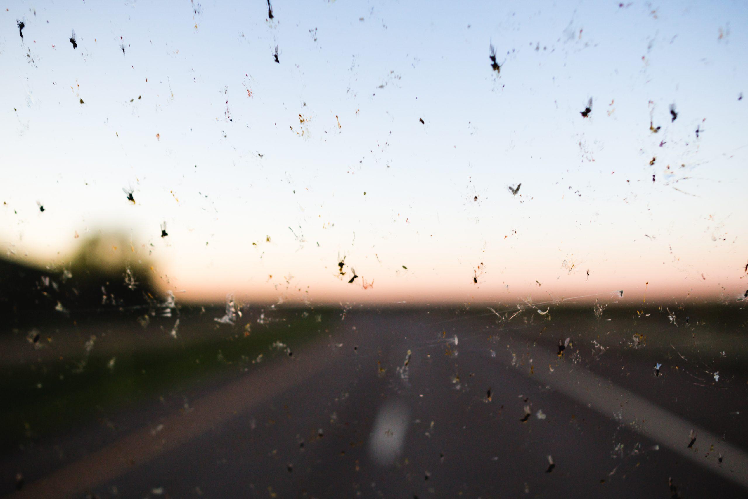 Dead Bugs Windshield
