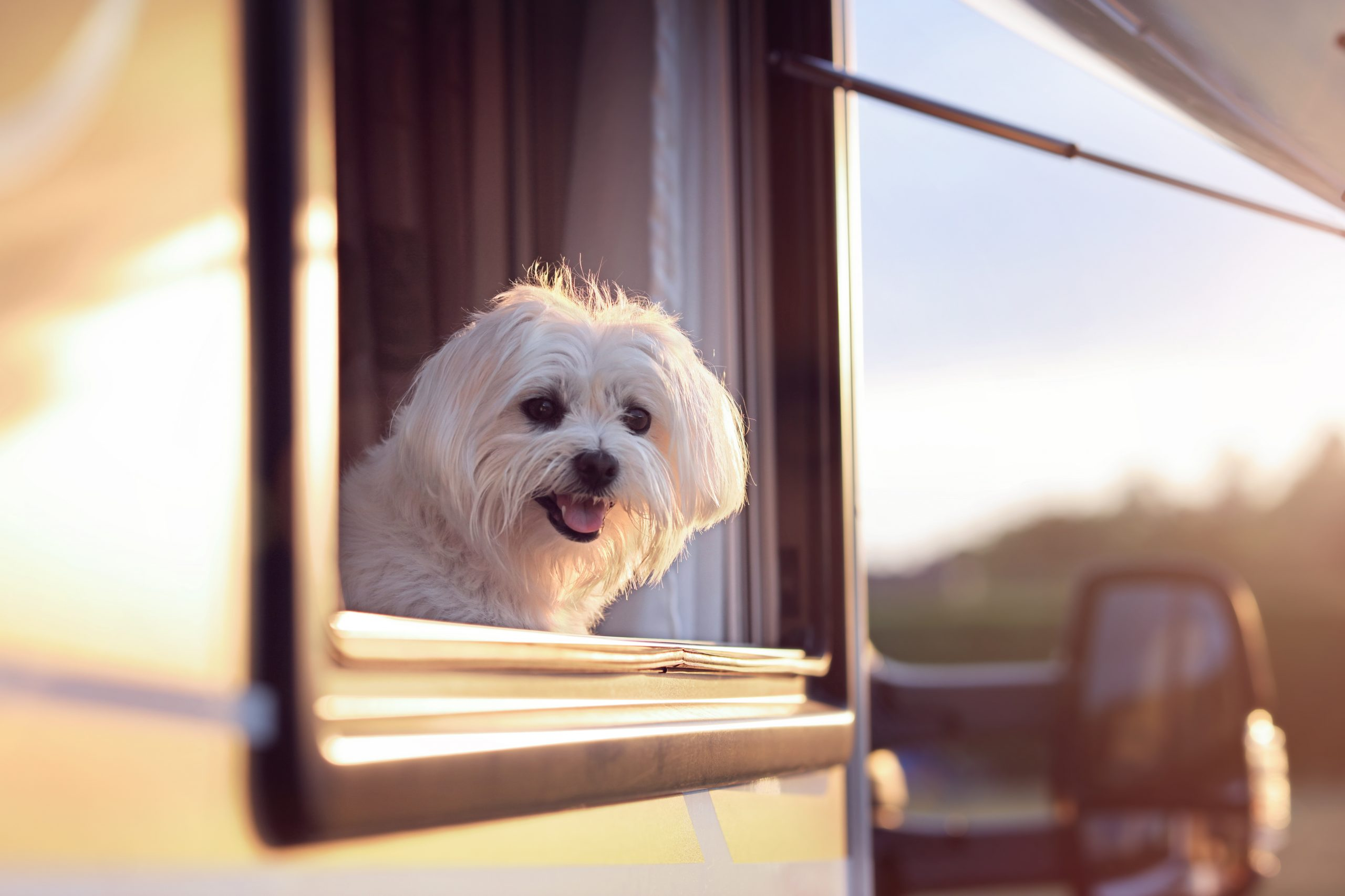 Right RV for Your Dog