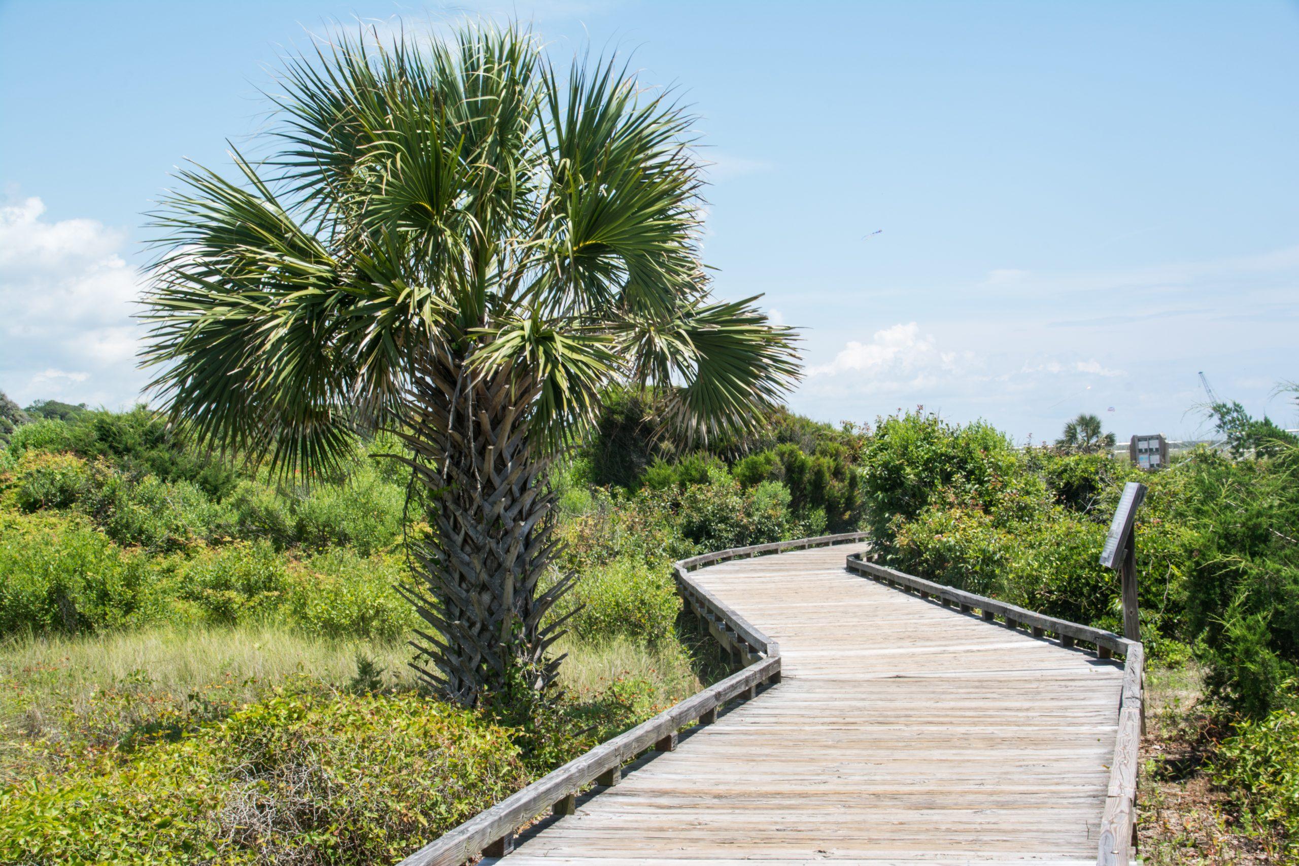 Myrtle Beach State Park, South Carolina