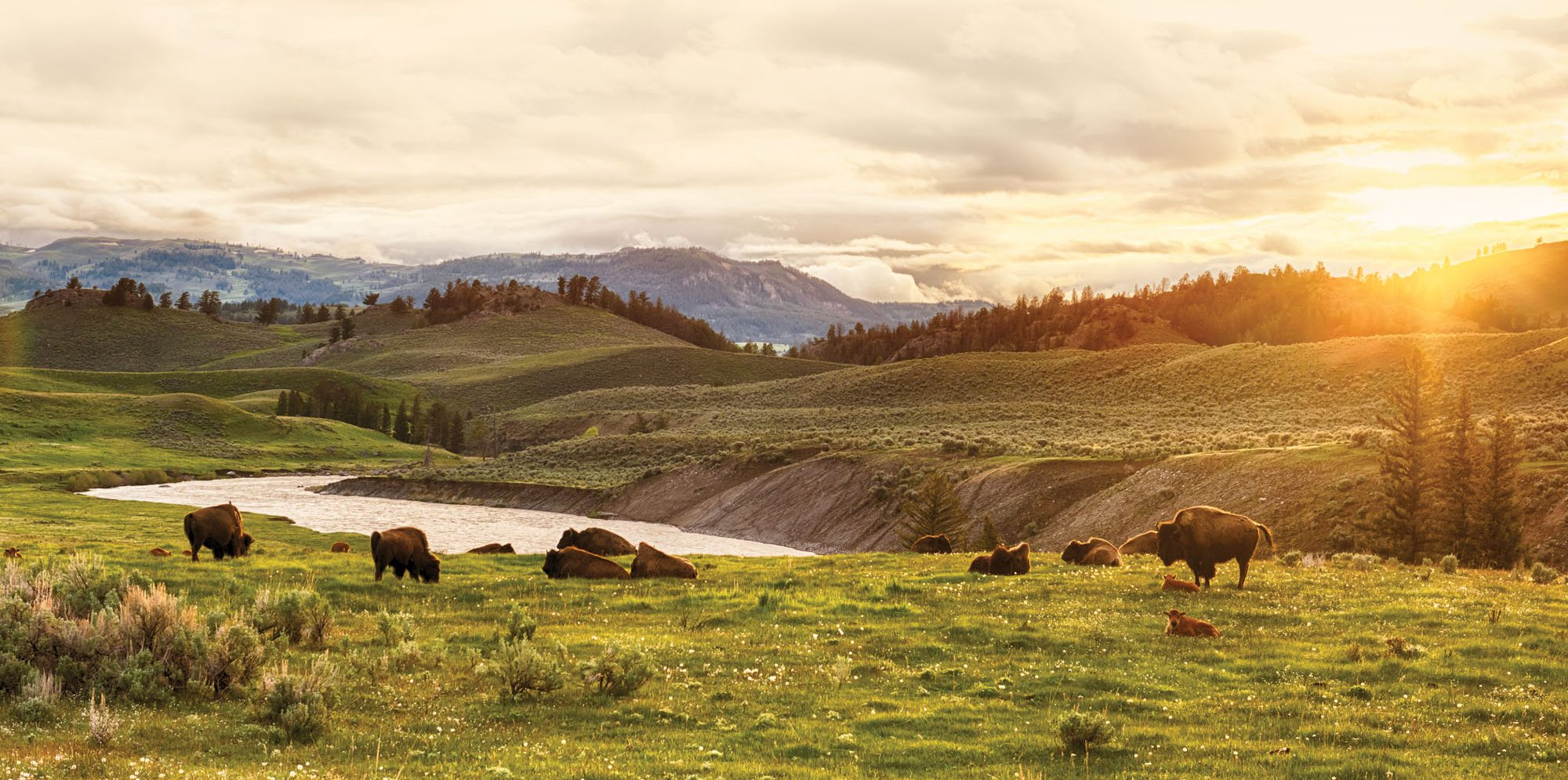 Insider's Guide to Yellowstone