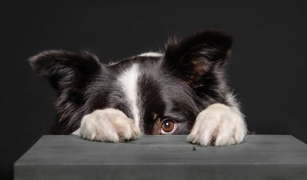 Help Your Dog Deal with Noise