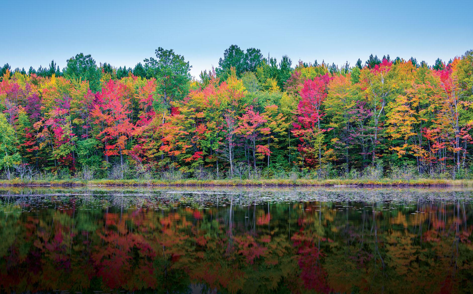 Fall Trees in Michigan