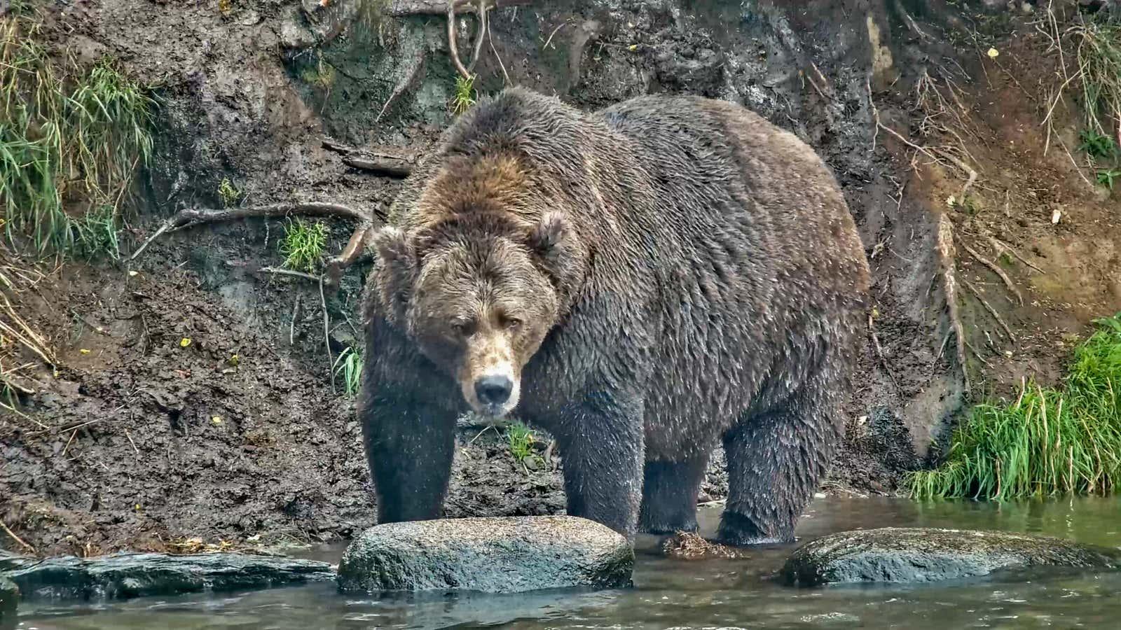 Popeye bear